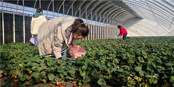 反季蔬果新鲜上市 带动休闲采摘热